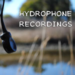 Hydrophone Recordings